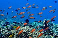 Coral Reef, Okinawa Japan