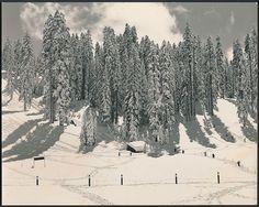 1940 Original Photo YOSEMITE ANSEL ADAMS - Badger Pass in YOSEMITE PARK