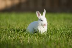 20 Adorable Bunnies Sticking Their Tongues Out