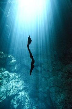 Freediving:  the magic of exploring the ocean on a single breath