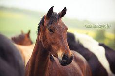 Horses in The Rain - Day 247/365 | par Sasha L'Estrange-Bell