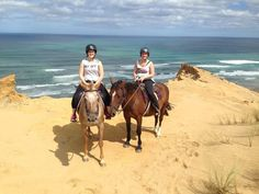 Horse riding treks Paihia, Bay of Islands Experience a magical 1 or 2 hour horse trek with outstanding views of the beautiful Bay of Islands & the Pacific Ocean. Bay Of Islands, Pacific Ocean, Horse Riding, Dune, New Zealand, Trek, Camel, Remote, Coast