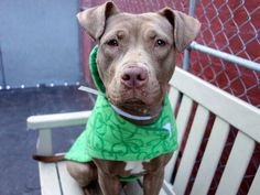 CAN YOU PLS RETWEET ME? WITHOUT YOUR HELP I WILL DIE TODAY GUILIANA 1YR #NYC DEATHROW 3/31 https://www.facebook.com/Urgentdeathrowdogs/photos/a.611290788883804.1073741851.152876678058553/982970548382491/?type=3&theater… …