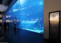 Jobs In Dubai At Dubai Aquarium