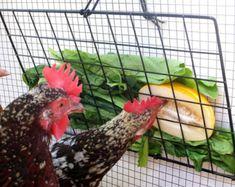 """Veggie Peck-It-propre mangeoire pour les poulets, 10 """"x 16"""", noir-comprend panneau Grille, cordon, bascule et câble liens"""