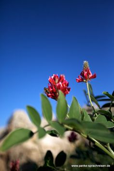 Malta Malta, Plants, Language School, Malt Beer, Plant, Planting, Planets