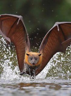 Tame Animals, Majestic Animals, Nature Animals, Animals And Pets, Beautiful Birds, Animals Beautiful, Amazing Animal Pictures, Woodland Creatures, Animals Of The World