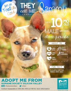 TERRIER MIX PUPPY AVAILABLE FOR ADOPTION | Sammy A#: 119343 - Humane Society Silicon Valley - Milpitas, California