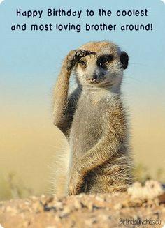 More Kat Salute – Cute - Animals Wild Life Animals And Pets, Funny Animals, Cute Animals, Wild Animals, Baby Animals, Exotic Animals, Wild Life, Wildlife Photography, Animal Photography