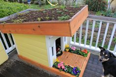 Dog House With Porch On Top - Noten Animals