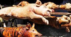 #HeyUnik  10 Data & Fakta ilmiah mengapa babi itu HARAM #Link #YangUnikEmangAsyik