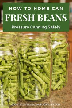 Preserve fresh beans by home canning them in mason jars. How to pressure can green beans safely so you can add jars to your pantry and food supply. Step by step instructions and recipe for canning beans. Green Beans Pressure Cooker, Canning Pressure Cooker, Pressure Canning Recipes, Canning Tips, Home Canning, Pressure Cooking, Can Green Beans, Cooking Green Beans, Canned Green Bean Recipes