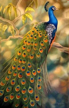 Beautiful peacock art.  #Peacocks  #PavasReales