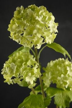 Green Viburnum Artificial 32 in. Branch Viburnum are a great bouquet filler. Green Flowers, Faux Flowers, Pretty Flowers, Silk Flowers, Hydrangea Flower, My Flower, Flower Ideas, Wedding Flower Decorations, Wedding Flowers