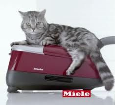 Most American houses harbor significant amounts of at least five allergy-provoking irritants. Got a sufferer under your roof? Make sure that your vacuum does not spew dust and allergen bk in the room. Get a Miele Miele Vacuum, American Houses, Pet Hair Removal, We Dont Talk, Best Vacuum, Vacuum Cleaners, Hard Floor, Vacuums, Maid