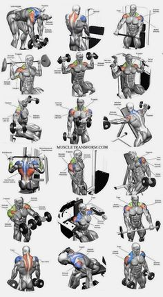Shoulder Workout Routine To Add Serious Size To Your Shoulders. How To Get The Most Out Of This Shoulder Workout. Moving your muscle Shoulder Workouts For Men, Shoulder Workout Routine, Best Chest Workout, Chest Workouts, Shoulder Workout At Home, Shoulder Exercises, Gym Workout Chart, Gym Workout Tips, Weight Training Workouts