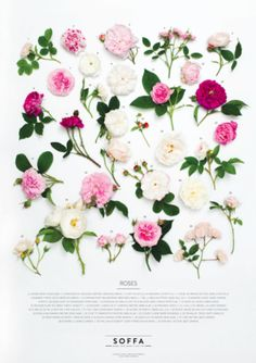 Poster ROSES by SOFFA / buy at shop.soffamag.com / Photo by: Adéla Havelková #SoffaMag # SoffaTime #Design #Photography #Flowers