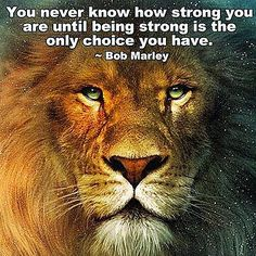 #BobMarleyQuote #Truth #LifeQuote #Battle #life #dontgiveup #dontgivein #motivationalquote #priorities #change #motivationalquotes #inspiration #inspirationalquote #inspirationalquotes #Quotes #Quote #passion #notgivingup #pushyourself #staystrong #strength #StayFocus #warrior #fighter #staypositive #BeastMode #Desire #success #lion #courage