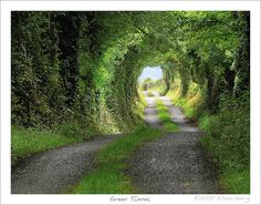 """Green Tunnel or 'The Road to Hobbiton' """"This is a real photo of a real road with real trees and the original light (in fact it was raining). It was taken near Spancill Hill in County Clare in the west of Ireland . For those of you who want to try yourself: The exact location is 8°49'51.35""""W - 52°50'51.45""""N - off the R352 between Ennis and Tulla."""