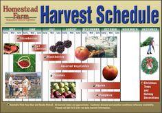 Harvest Schedule at homestead farm - peaches, blackberries, apples, and pumpkins Pick Your Own Apples, Pick Your Own Pumpkins, Homestead Farm, Homestead Gardens, Strawberry Tart, Cherry Tart, Vegetable Farming, Fruit Picking, Apple Tree
