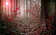 widescreen wallpaper forest