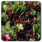 Organic DMR Salad Mix