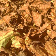 Bei all diesen vielen Blätterhaufen vergisst ganz schnell sich altersgerecht zu benehmen ;-) #duesseldorf #bilk #urban