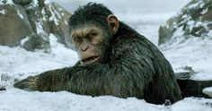 Relive Caesar's Journey in New War for the Planet of the Apes Preview -- New footage from War from the Planet of the Apes shows Caesar's struggles to repair the world alongside humans. -- http://movieweb.com/war-for-planet-of-apes-tv-spot-caesar-journey/