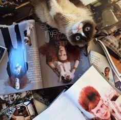Grumpy Cat Pays A Visit To Vogue Magazine | Radar Online