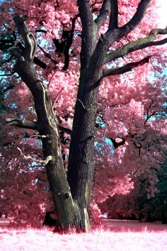 Hopes are planted in friendships garden where dreams blossom into priceless treasures. #tree #blossom #nature