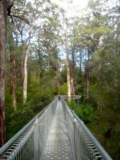 Walpole WA, Tree Top Walk