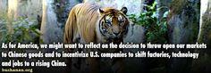 tiger-tiger-2.jpg (700×245)