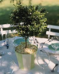 a centerpiece that continues to live--- bonsai