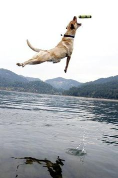 The greatest leap of dog - He knows where to fall? :))