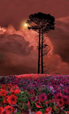 Stunning! No idea where this is, but it's amazingly beautiful! Field of flowers with single tree in dramatic light.