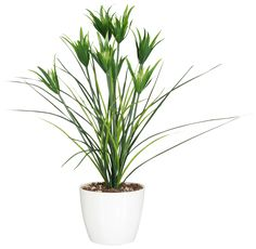 Home affaire Kunstpflanze grün, Höhe: 70cm, »Gras« Jetzt bestellen unter: https://moebel.ladendirekt.de/dekoration/dekopflanzen/kunstpflanzen/?uid=91eb1860-1e14-5ebf-beaf-c0abff80aa5d&utm_source=pinterest&utm_medium=pin&utm_campaign=boards #dekopflanzen #kunstpflanzen #dekoration