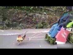 When you're too drunk to get an uber.. Ask a chicken https://youtu.be/gdQApW512IM