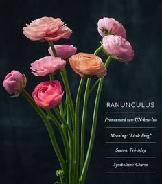 Flower Glossary: A new floral column on D*S where we give you cheat-sheet info on the flowers we love. Today: the sweet layered Ranunculus #flowers #flower #ranunculus #weddings #pink #coral #blush #stems #floral #flowerglossary