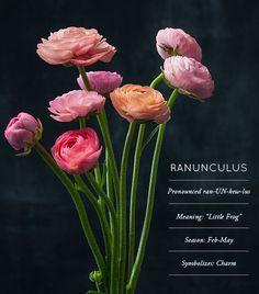 Flower Glossary: Ran