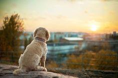 Dog portrait at dusk - Photography by Toast Photos