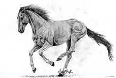 Dark Thoroughbred by farfinmosker.deviantart.com on @DeviantArt