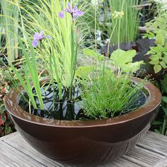 English potted pond