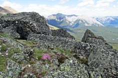 The Mushroom Garden is a fascinating rock feature on the south ridge of Mount Allan above Nakiska Mountain Resort in Kananaskis Country west of Calgary, Alberta, Canada.