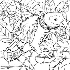 parrot coloring pages color plate coloring sheetprintable coloring picture