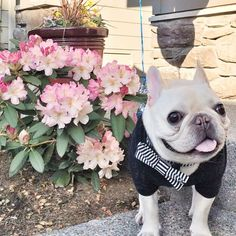 20 pets who are chicer than you on Instagram: