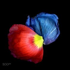 THE FALLEN… poppy by Magda Indigo on 500px