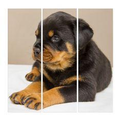 Cute rottweiler puppy triptych - dog puppy dogs doggy pup hound love pet best friend