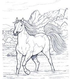 die 31 besten bilder zu ausmalbilder pferde   ausmalbilder pferde, ausmalbilder, ausmalen