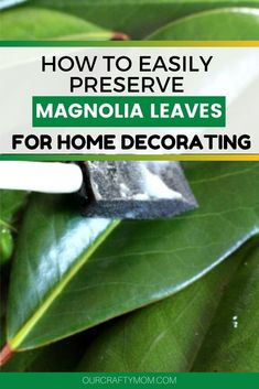 See how easy it is to preserve fresh magnolia leaves and use them in your Holiday Decorating. Use them in garlands, wreaths or make a large wall hanging. #ourcraftymom #diymagnoliawreath #howtopreservemagnolialeaves Magnolia Leaf Garland, Magnolia Branch, Magnolia Leaves, Country Christmas Decorations, Holiday Decorating, Christmas Crafts, Holiday Wreaths, Preserves, Floral Arrangements