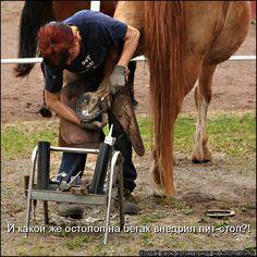 Blacksmith Shoeing a Horse.